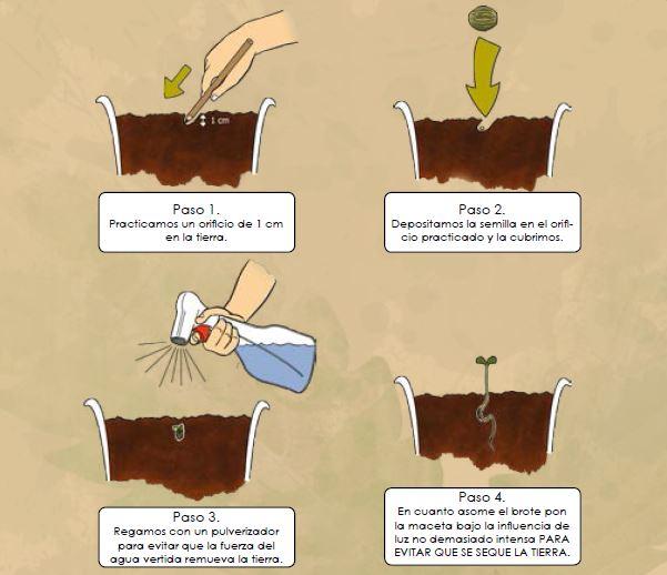Como germinar semillas de marihana colombia colombia - Como plantar marihuana en casa paso a paso ...