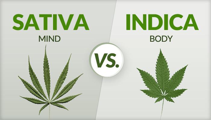 Índicas y Sativas