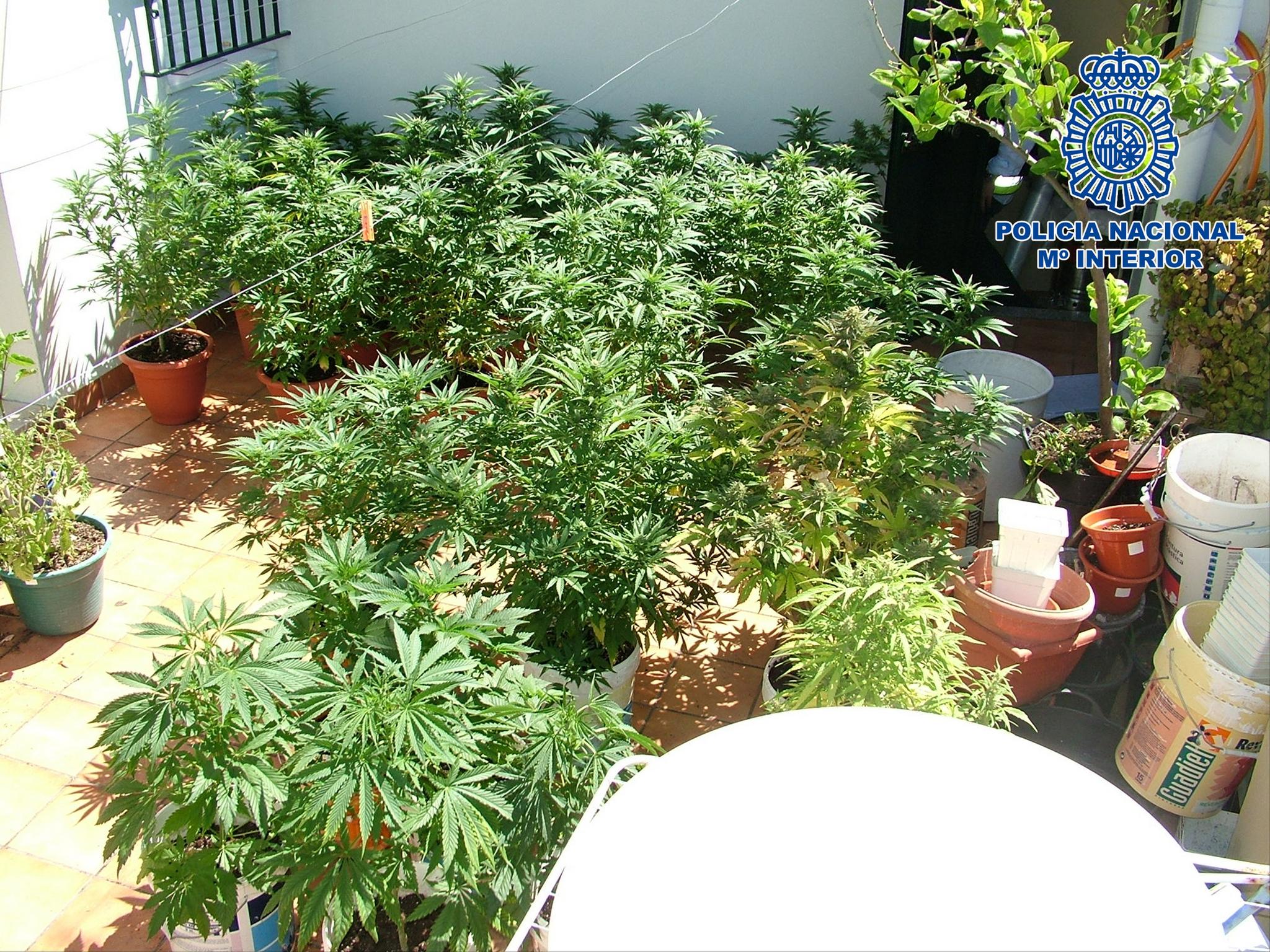 ¿Cuántas plantas puedo cultivar?