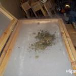 Extracción de hachís con nitrógeno líquido. Foto 13