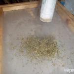 Extracción de hachís con nitrógeno líquido. Foto 22