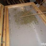 Extracción de hachís con nitrógeno líquido. Foto 25