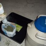 Manicurado extracción de hachís. Foto2