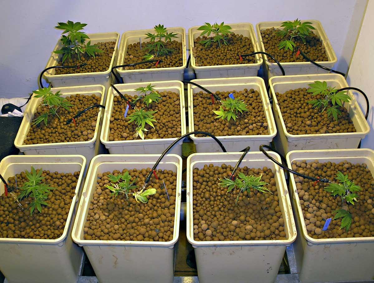 La elecci n del primer sistema de cultivo for Construir mesa de cultivo