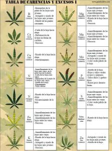 Carencias en tu planta