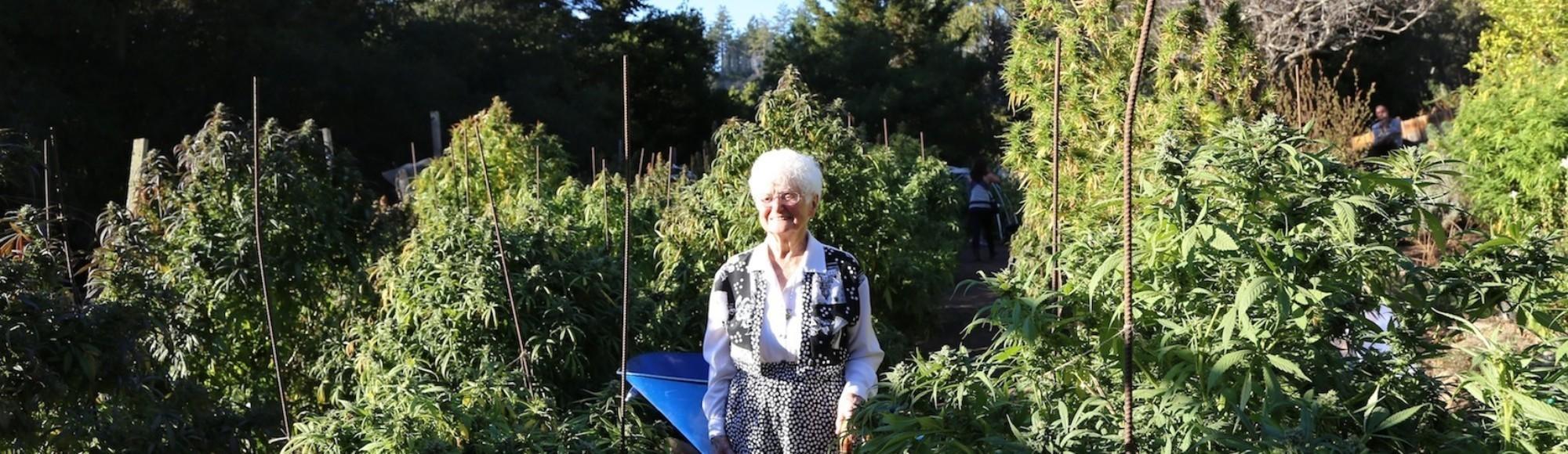 La abuela 'cocinitas' de cannabis