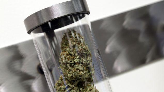 Cannabis Brasil