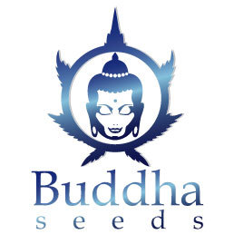 Buddha Seeds es sponsor del evento