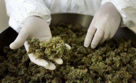 Sentencia sobre marihuana medicinal