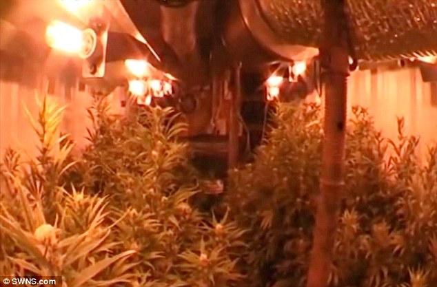 Las plantas que se cultivaba en su interior