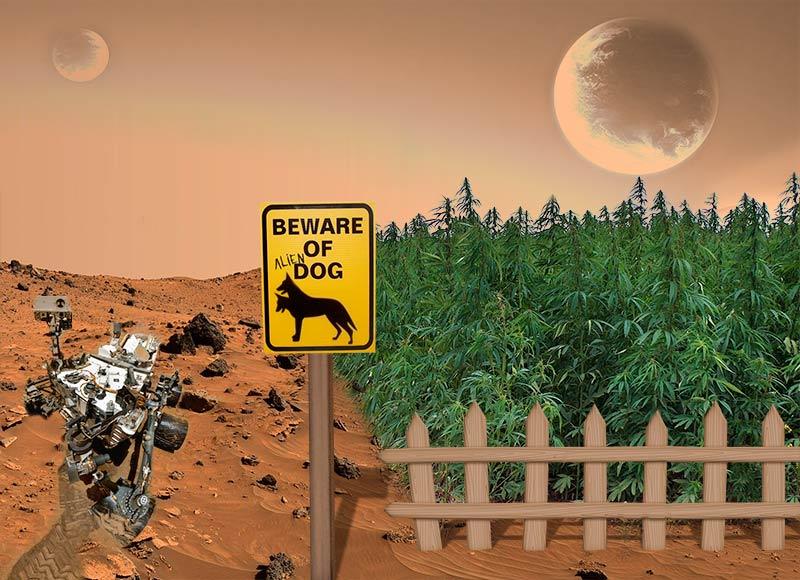 Una simulación de un cultivo de cannabis en Marte