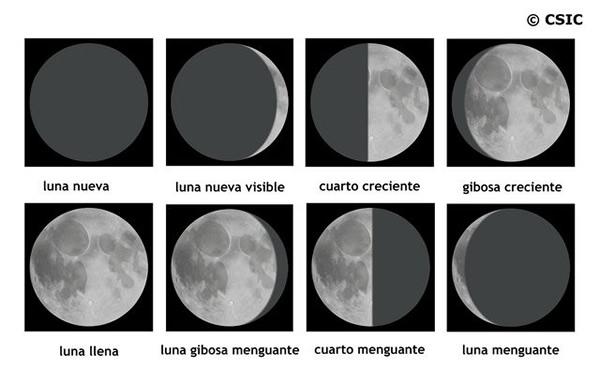 Influencia de la luna en el cultivo de marihuana for Fases de la luna hoy