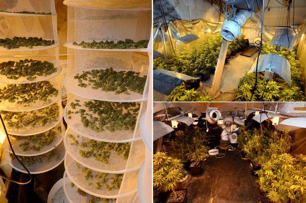 Fábrica de cannabis descubierta por la policía en Devon