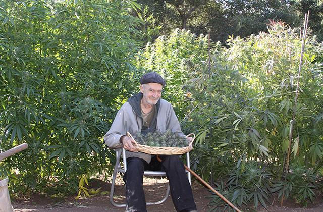 Marihuana medicinal: El jardín de la alegría