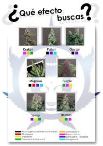 ¿Qué efecto buscas en nuestras variedades?