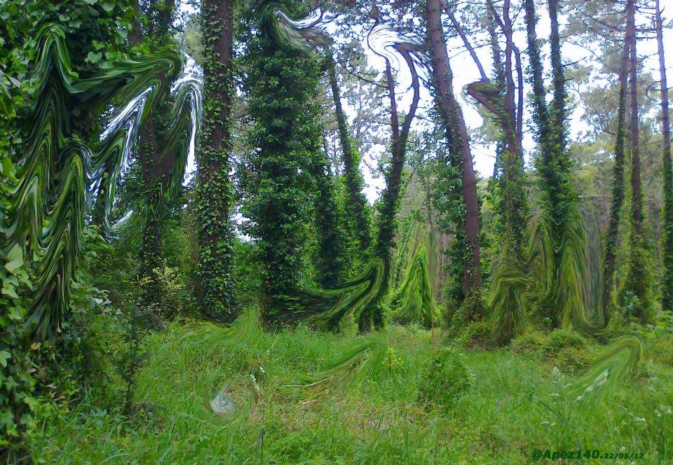 El bosque con el que alucinas