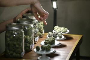 Muestrario de marihuana de una tienda en Colorado