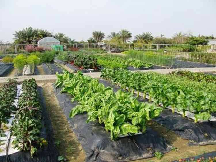 avrdc-biodiversity-crops