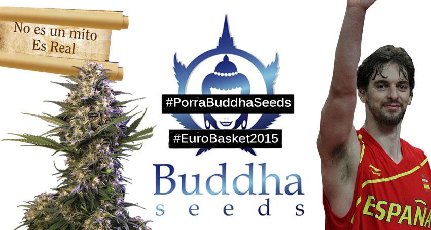 Porra Buddha Seeds