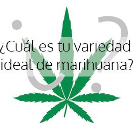 ¿Cuál es tu variedad ideal de marihuana?