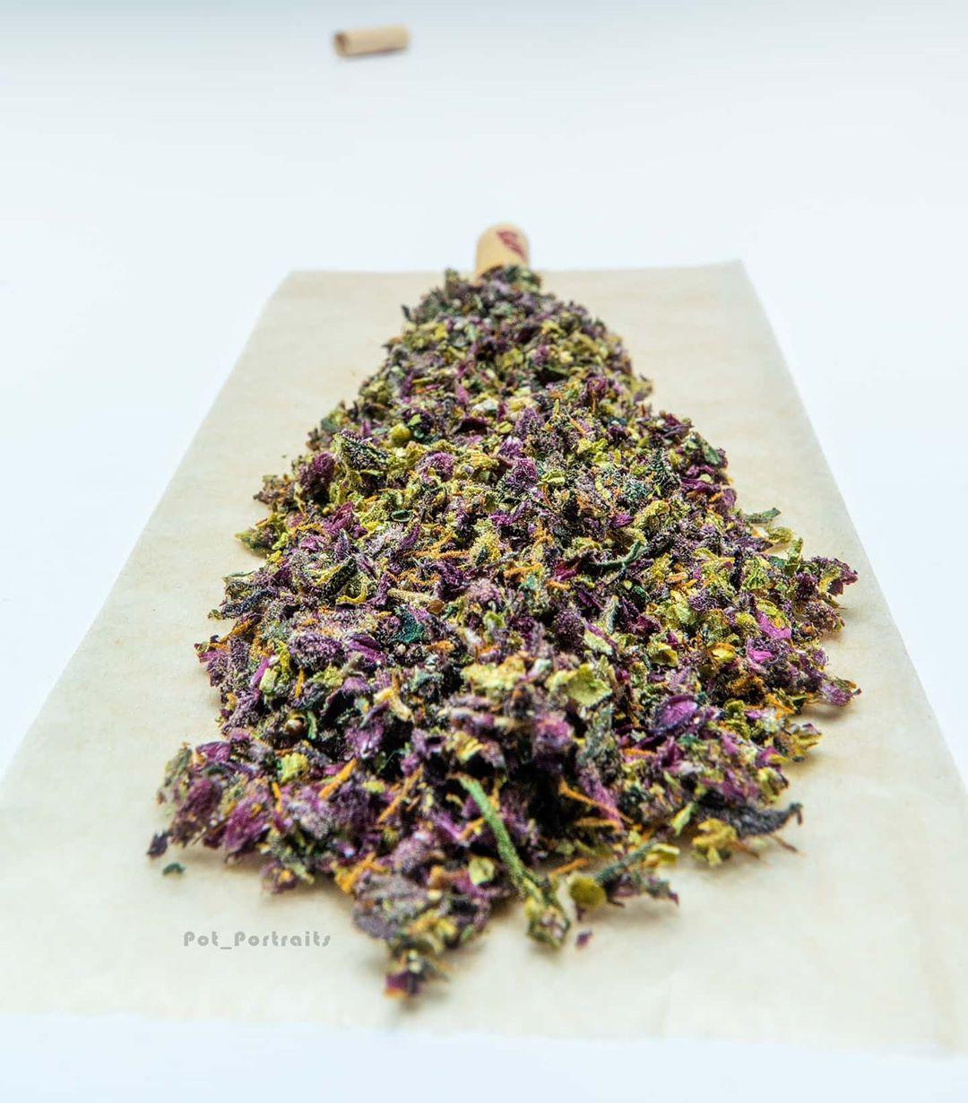 Purple Kush Buddha Seeds
