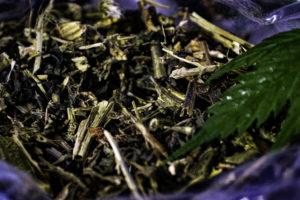 Cultivo orgánico de cannabis