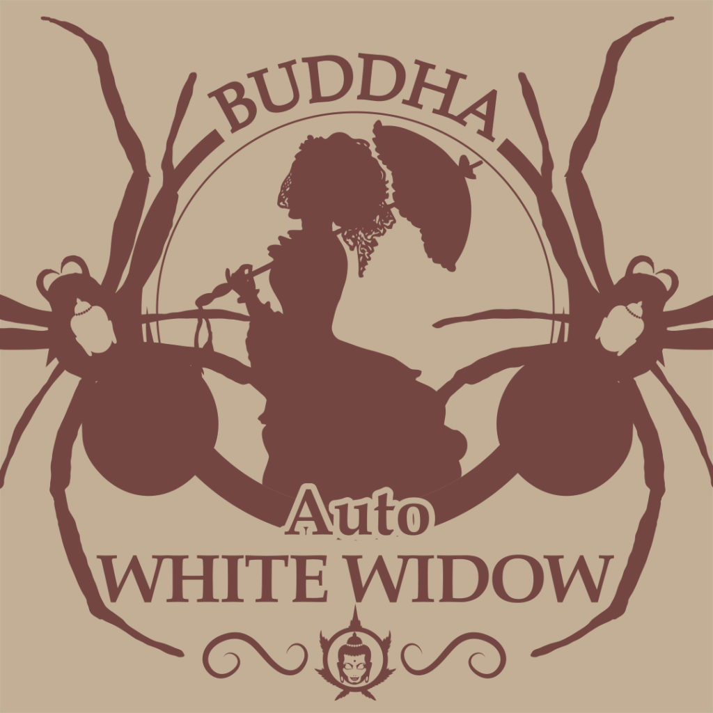 Buddha Auto White Widow de Buddha Seeds