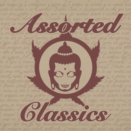 Assorted Classics de Buddha Seeds