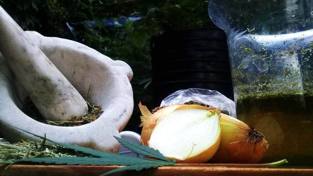 preventivo natural plantas