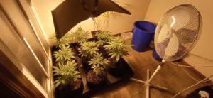 Ventilación de cannabis en interior