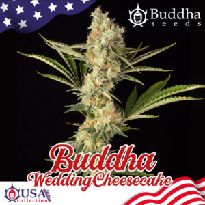 Buddha wedding Cheese Cake de Buddha Seeds